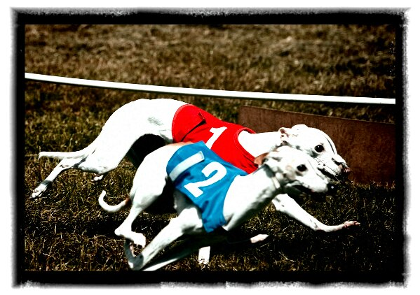 Gypsy and Lucy racing
