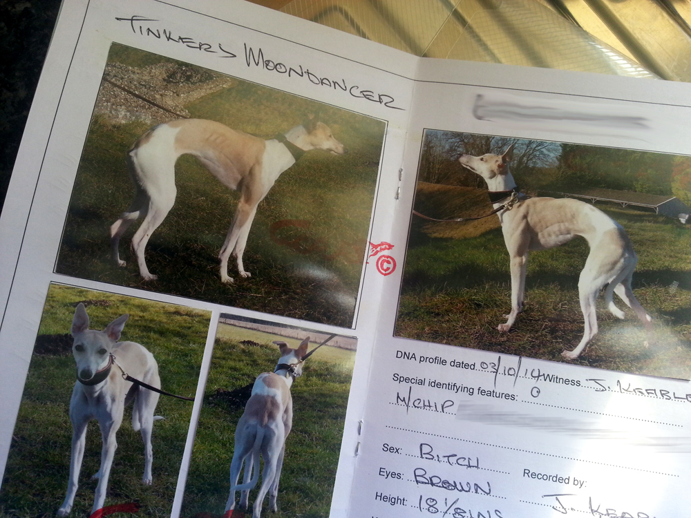 Whippet racing passport - WCRA